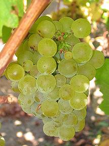 215px-Sauvignon_blanc_grapes