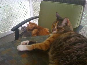 3catsJuly2011a