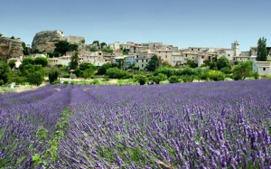 france-provence-lavenderfields-dd