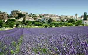 france-provence-lavenderfields-dd