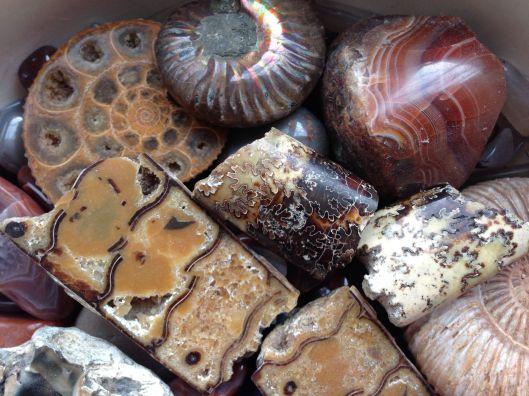 fossilsagates