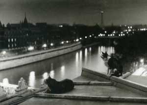 Paris, Les chats la nuit, Robert Doisneau