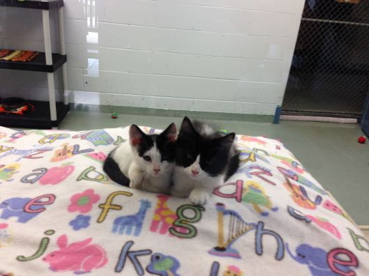 shelterkitties